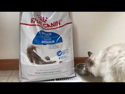 Ragdoll cat - new dry food - ROYAL CANIN indoor adult  - odor reduction and moderate calorie