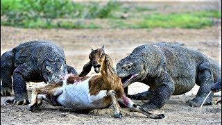 Biggest Islands Run By Animals
