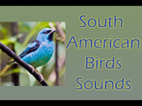 Video of South American Birds Free