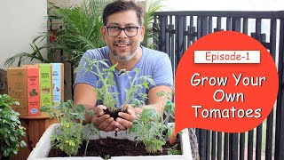 Grow Organic Tomato Plants At Home From Seeds    Start Indoor Vegetable Garden