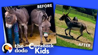 Donkey With Overgrown Hooves Runs Free For The First Time | The Dodo Comeback Kids