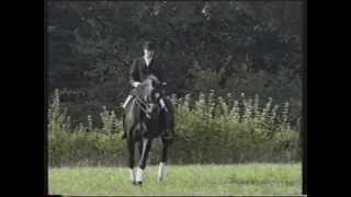 video of Feiner Stern