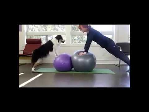 Dog The Yoga Teacher | Dog Is Doing Yoga With His Owner | Dog Lover