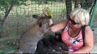 Мое первое знакомство с кенгуру. Сафари парк львов