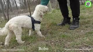 2021 03 18 Bobo…