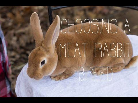 , title : 'Choosing a Meat Rabbit Breed
