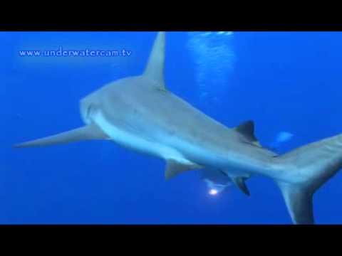 Ai Futaki, Freediving with Sharks, Yap allgemein,Yap,Mikronesien