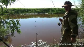 Рыбалка в сибири на сазана