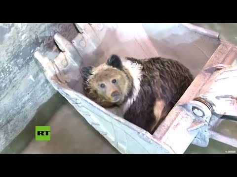 Bear rescued with an excavator after falling into canal in China