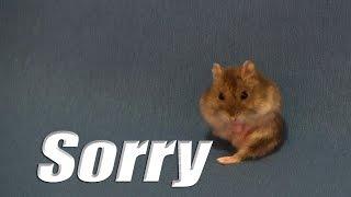 Sorry - Justin Bieber - My Lola Dancing rat yeahhh !!!