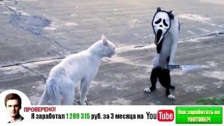 Самые смешные кошки 2014 #4