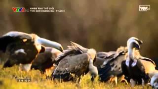 các loài chim ăn thịt