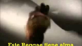 Toots & The Maytals - Reggae Got Soul (Subtítulos Español)