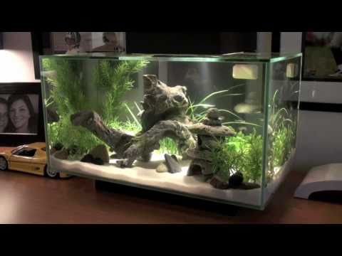 Fluval EDGE Fish Tank [HD]