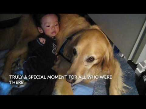 Therapy Dog Poppy Brings Comfort