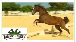 Tamme befreit Pferd: Es durfte 3 Jahre nicht frei laufen! | Tamme Hanken | Kabel Eins
