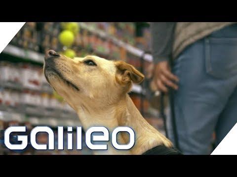 Mit Hundefutter zum Milliardär: Die Fressnapf-Story | Galileo | ProSieben