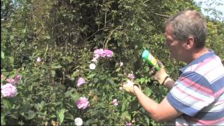 How to Get Rid of Bindweed | Video | Roundup Weedkiller