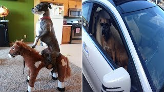 Hilarious Photos That Prove Boxers Are The Weirdest Yet Most Adorable Dogs Ever (Part 4)
