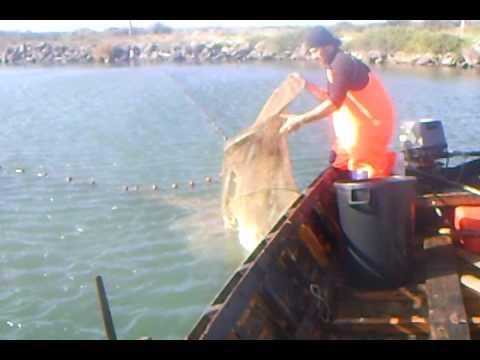 Scaricare il russo che pesca 3.7 per landroide