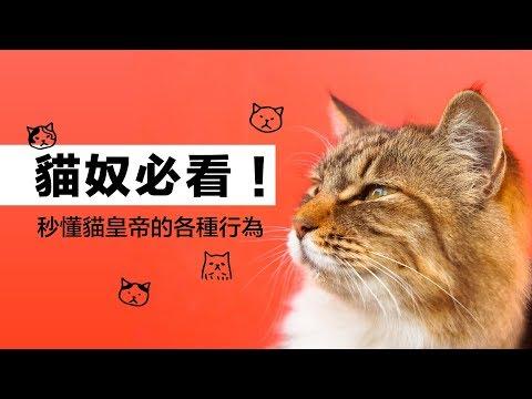 貓奴必看!秒懂貓皇帝的各種行為