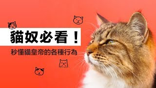 貓奴必看!秒懂貓皇帝的各種行為|科學大爆炸EP.63