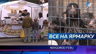 В Великом Новгороде прошла первая сельскохозяйственная ярмарка