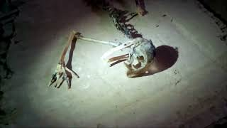 СТРАННОЕ СУЩЕСТВО ОБНАРУЖЕН В ПОДВАЛЕ В МОСКВЕ. рептилоид. неизвестное существо