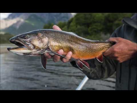 Fly Fishing at Rio Manso Lodge