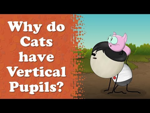 Why Do Cats Have Vertical Pupils? | #aumsum #kids #education #science #learn
