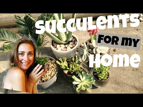 Potting Succulents for Radiation! // CLEAN INDOOR AIR