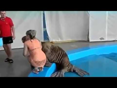 Seal Slaps Girl on the Butt