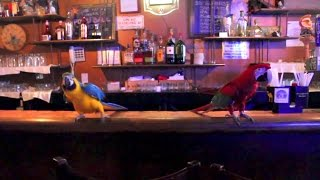 NYC Parrot Adventures Group Visits a Manhattan Bar/Lounge