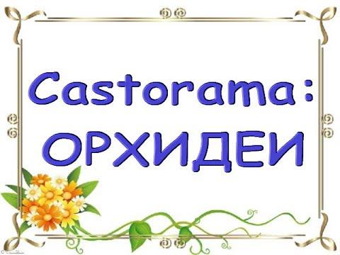 """ЧУДЕСНЫЙ завоз ОРХИДЕЙ в """"Castorama"""",12.02.21,Самара."""