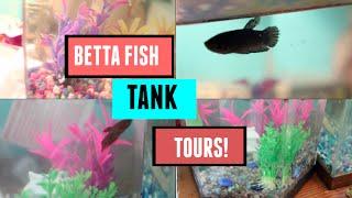 Betta Fish Tank Tours!