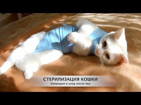 Стерилизация кошки. Операция и уход после нее. Как это было...