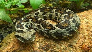 14 Rare Fascinating Serpents
