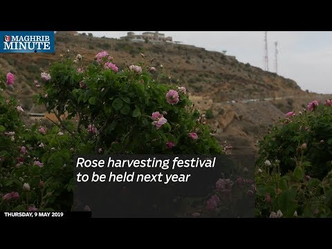 Rose harvesting festival to be held next year