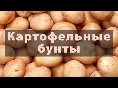 Картофельные гиганты: Китай, Индия, Россия