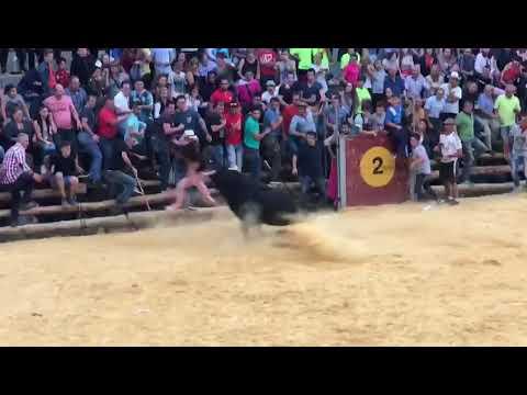 Cogida de toros en la peza (Granada)