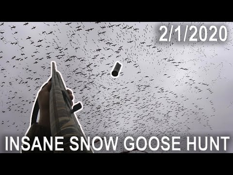 on-the-x-epic-snow-goose-hunting-in-new-jersey-2020-part-2