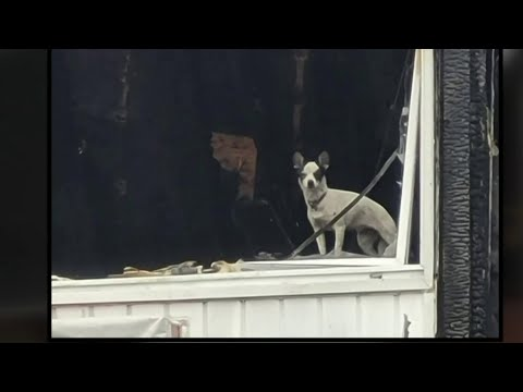 Missing puppy found alive in burned Macomb County apartment complex 2 weeks after fire