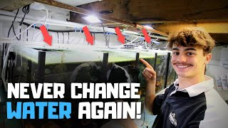 Why I NEVER Change Water in My Aquariums! (Auto Water Change System)