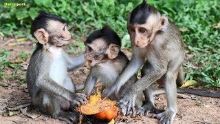 Cute Baby Monkeys 免费在线视频最佳电影电视节目 Viveos Net