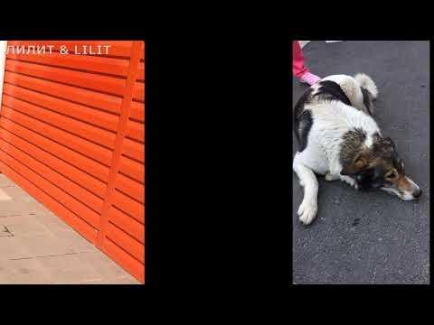 Собакен сосиска и просто двортерьер) #собаки#наши питомцы#