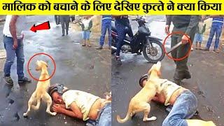 देखिए कुत्ते इंसानों के लिए क्या-क्या कर जाते है  | This Dog video will Melt your Heart