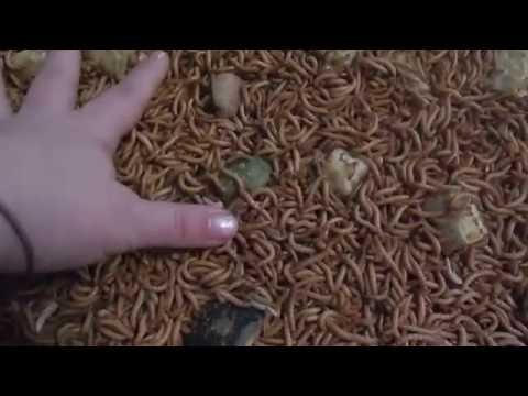 Mga Produkto paalisin parasitiko mula sa katawan