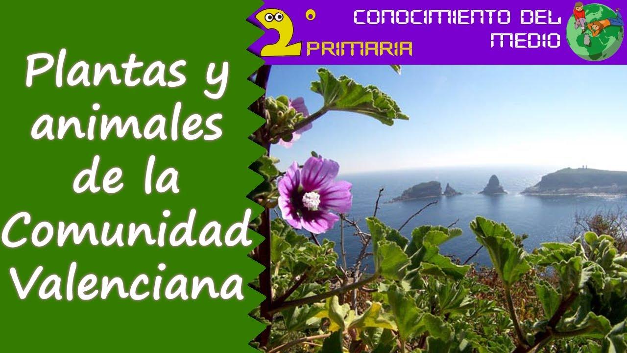 Cono, 2º Primaria. Tema 15. Las plantas y los animales de la Comunidad Valenciana