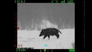 Охота на кабана. Тепловизор Acher TSA 9/640