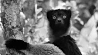 Sir David Attenborough (1961) Best Of Zoo Quest To Madagascar | BBC Earth